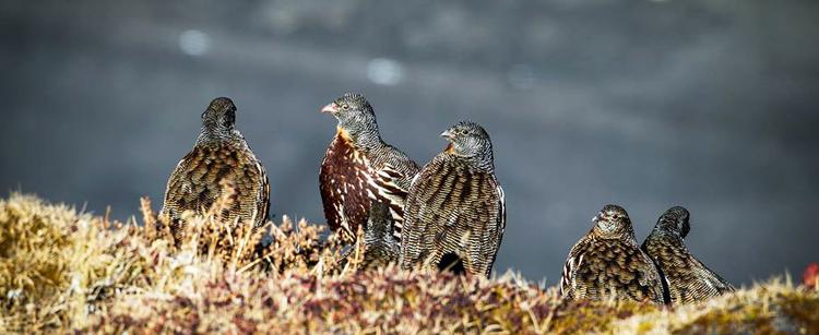 Birds in Sangti Valley